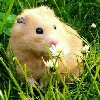 HAMSTER PRODUCT