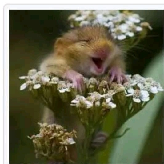 Tikus Menggemaskan